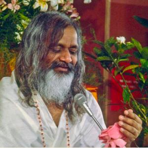 Maharishi et la rose